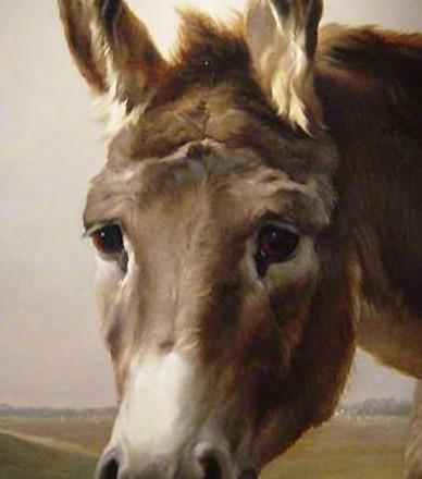portrait d'âne oeuvre Daniel Trammer 60x90 Cm