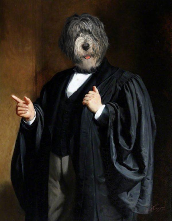 Portrait de bobtail en avocat oeuvre de Daniel Trammer